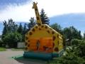 giraffe19